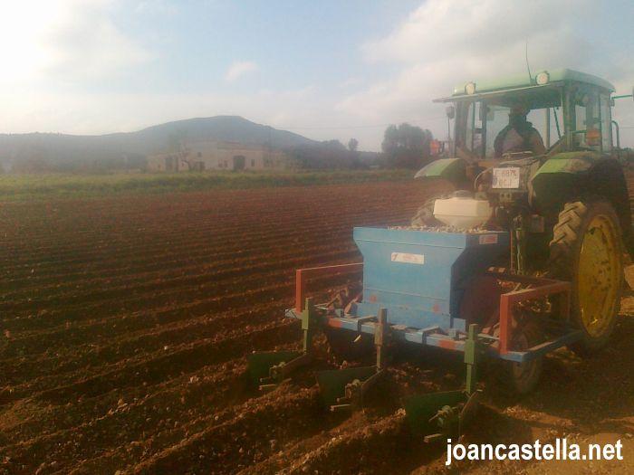 Verdures Ecològiques Joan Castellà > <b>COM ESTÀ L´HORT</b> > Sembrant les patates