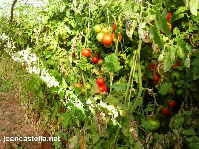 Verdures Ecològiques Joan Castellà > <b>COM ESTÀ L´HORT</b> > El canvi climàtic ens afecta .....