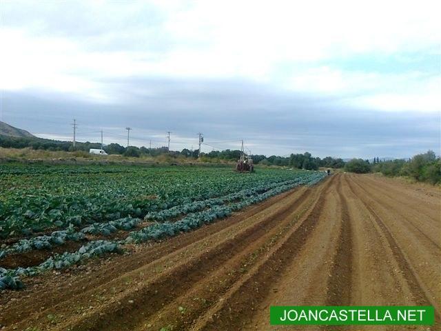 Verdures Ecològiques Joan Castellà > <b>COM ESTÀ L´HORT</b> > Cuidant les cols