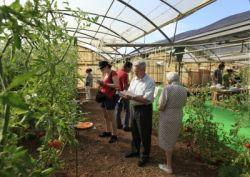 Éxito de participación en la primera cata de tomates