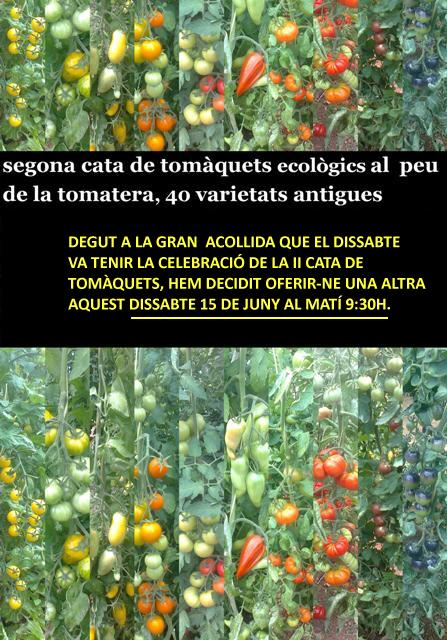 Verdures Ecològiques Joan Castellà > <b>NOTÍCIES</b> > 2ª CATA DE TOMÀQUETS ECOLÒGICS AL PEU DE LA TOMATERA