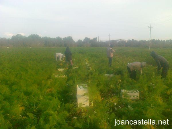 Verdures Ecològiques Joan Castellà > <b>COM ESTÀ L´HORT</b> > Com està el temps!!!
