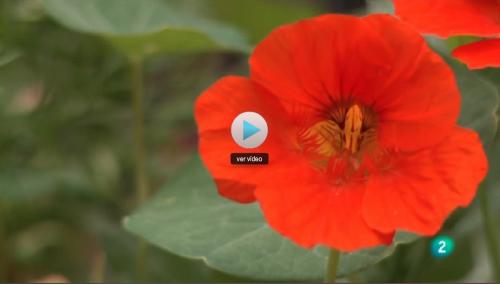 Verdures Ecològiques Joan Castellà > <b>NOTÍCIES</b> > Vídeo del programa Naturalmente - El cultivo natural de la tierra, de la 2 de RTVE