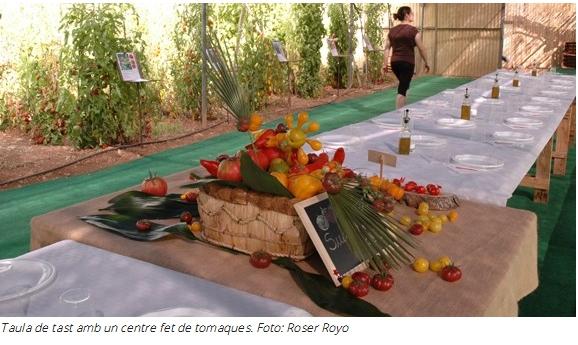 """Verdures Ecològiques Joan Castellà > <b>NOTÍCIES</b> > El mitjà digital AGUAITA.CAT publica el reportatge """"Temps de tomaques"""""""